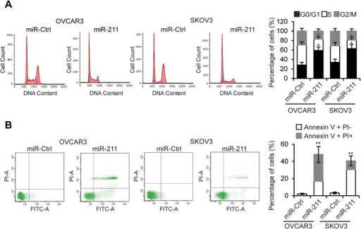 miR-211 arrests EOC cell cycle and induces apoptosis. A. Cell cycle assay of OVCAR3 and SKOV3 cells transfected with miR-211 or miR-Ctrl. B. Apoptosis analysis of OVCAR3 and SKOV3 cells transfected with miR-Ctrl or miR-211. *p < 0.05, **p < 0.01 compared to miR-Ctrl transfected cells. Data are presented as mean ± SEM of three independent experiments.