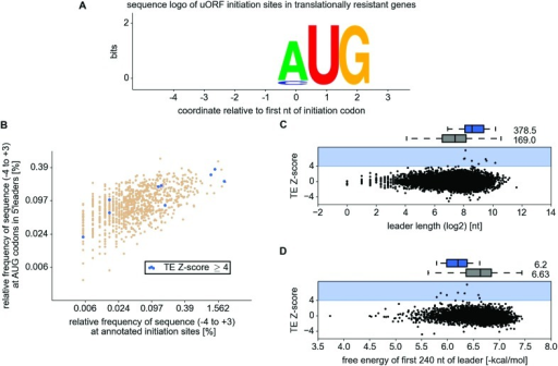 Analysis of 5' leader and upstream open reading frame (uORF)features in the resistant mRNAs.(A) WebLogo representation of information content withintranslation initiation sequences (from position −4 to position+3) for uORF starts in the resistant mRNAs. (B)Comparison of frequencies of various translation initiation sequences(−4 to +3) for annotated ORFs (x axis) andAUG present in 5' leaders (y axis). Translationinitiation sequences of uORFs in the resistant mRNAs are shown in blue.(C) Scatter plot representing relationship betweentranslation response (y axis) and the length of5′ leaders (x axis). (D)Relationship between translational response (y axis) andfree energy of potential RNA secondary structures within the first 240 ntof 5′ leaders (x axis).DOI:http://dx.doi.org/10.7554/eLife.03971.013