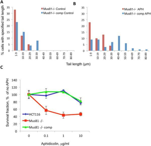 Mus81 deficiency decreases transient DNA breakage and increases sensitivity to low doses of aphidicolinMus81 −/− (Mus81-deficient cells) and Mus81-comp (Mus81 −/− cells complemented with exogeneous Mus81 as described previously30, 31) were exposed to carrier (A) or to 0.5 μg/ml (about 1.5 μM) of aphidicolin (B) for 10 minutes and collected for neutral Comet assay. (C) HCT116 cells, Mus81−/− cells and Mus81−/−comp cells were treated with aphidicolin for 2 hours. The survival rate of cells was determined by clonogenic assay.