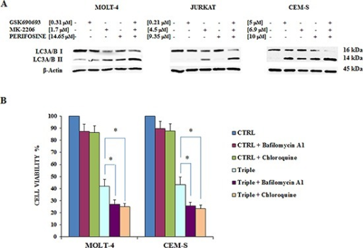 Triple Akt inhibition induces enhanced autophagyA The effect of the three drugs administered alone or in combination on autophagy, after 24 h of treatment, in MOLT-4, JURKAT and CEM-S cell lines, documented by the lipidation of the autophagy marker LC3A/B. The increase in the triple treatment is well evident. Antibody to β-actin served as a loading control. B MTT assays documenting the effects of Bafilomycin A1 and Chloroquine on viability of MOLT-4 and CEM-S cells treated for 24 h with Perifosine, GSK690693 and MK-2206 administered in combination. Results are mean of three different experiments ± SD. Asterisks indicate significant differences (*p < 0.05). One representative experiment of three is shown as well as cell lines are representative also of the others not shown.