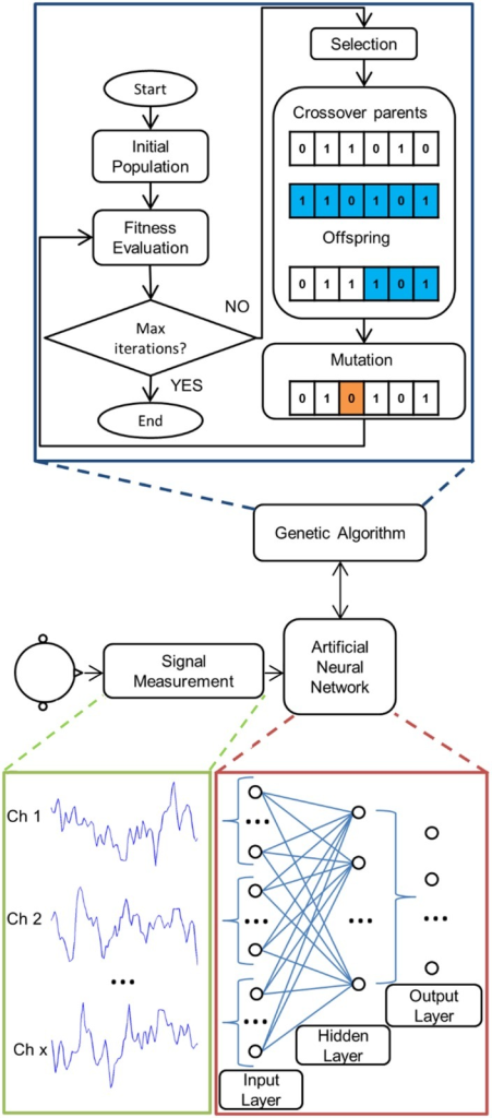 Illustration of method.Signals acquired from the brain-computer interface (BCI) user are initially used to train an artificial neural network (ANN). The number of hidden layers and neurons is determined using a genetic algorithm (GA). At the termination of the GA, the network found to have the fittest structure is used in the BCI. The ANN is a fully-interconnected multi-layer perceptron. The input layer consists of every time-point of each channel. Hence, each neuron in the first hidden layer is able to generate features based on both spatial and temporal inferences. The hidden layers then feed into the output neurons, which determine the classifier output.