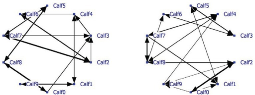 Social network of veal calves (NND < 1 meter) in an indoor intensively managed group (left: positive network, right: negative network).