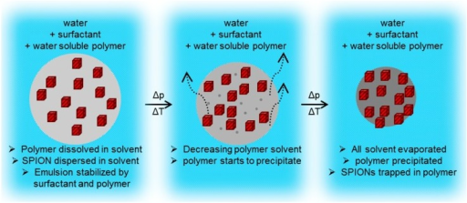 Schematic formation of SPION/polymer hybrid particle, starting from an oil in water emulsion droplet (left), proceeding with a high polymer concentration droplet (middle) and the formation of a solid polymer sphere with trapped SPIONs (right).