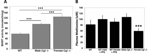 BHMT activity is increased in Cgl  mice. (A) Hepatic BHMT activity in WT control and male and female Cgl  mice was determined as described in the Materials and Methods. As there was no significant difference in BHMT activity between male and female WT mice values derived from both sexes were combined and represent an n of 12.Values shown for Cgl  mice represent the mean±s.d. derived from an n of 6 for each group. (B) Cgl  female but not male mice exhibit significantly reduced levels of plasma methionine. Plasma levels of methionine in wild type (WT) mice plus and minus treatment with the CGL specific inhibitor PPG and untreated male and female Cgl  mice. Values shown represent the mean±s.d. derived from 20 animals for WT and 10 animals for all other groups. ***P<0.001.