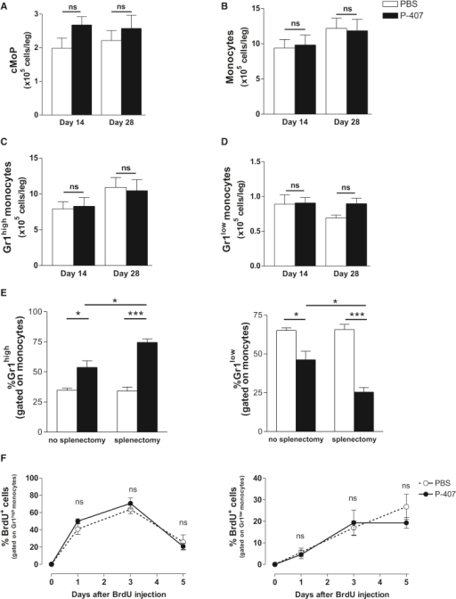 Modulation of BM and Blood Monocyte Dynamics in P-407-Treated Mice(A–D) Quantitative analysis of cMoPs (A), monocytes (B), and Gr1high (C) and Gr1low monocytes (D) in the BM after 14 and 28 days of P-407 or PBS treatment. Results are expressed as mean ± SE, n = 4 per time point. p values are indicated (unpaired t test); ns, nonsignificant.(E) Frequencies of Gr1high and Gr1low monocyte subsets after splenectomy in mice treated with PBS or P-407 for 14 days. Results are expressed as mean ± SE, n = 4. ∗p < 0.05 and ∗∗∗p < 0.001 (unpaired t test).(F) Percentage of BrdU incorporation into Gr1high (left panel) and Gr1low (right panel) monocytes over a period of 5 days following a single pulse of BrdU administered i.p. in three doses of 2 mg, 3 hr apart. Data are representative of two independent experiments. Results are expressed as mean ± SE, n = 3 in each group (unpaired t test); ns, nonsignificant.See also Figure S3.
