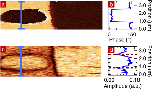(a) PFM-phase image of the sample where −200 V was applied. (b) PFM-phase profile extracted along the blue line on the PFM-phase image. (c) PFM-amplitude image of the same area. (d) PFM-amplitude profile extracted along the blue line. The position of the domain walls are indicated by dotted lines.