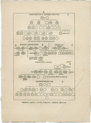 <p>Image of diagrams showing transmission of inherited diseases. Included are Huntington's chorea deaths, manic-depressive, imbecile, neurotic, varicele, neurotic, and hermaphroditism. Squares represent males and circles females says the key at the bottom of the page.</p>