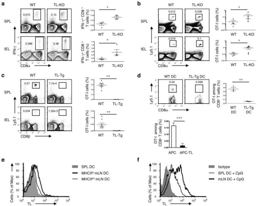 TL negatively affects memory generation of CD8αβ+ T cells(a) WT or TL- mice were orally infected with 1 × 109 ActA- Lm-OVA. 30 days p.i., splenocytes (SPL) and IEL were isolated for IFN-γ intracellular staining and CD8α cell surface staining after ex vivo re-stimulation with OVA257-264 peptide. Graph depicts pooled data ± s.e.m.. (b) 5 × 104 naïve Ly5.1+ CD8+ OT-I cells were adoptively transferred into Ly5.2+ WT or TL- recipients. One day after transfer, mice were orally infected with 1 × 109 ActA- Lm-OVA. Donor OT-I cells were tracked in the spleen and IEL 2 months p.i. Graph depicts pooled data ± s.e.m.. (c) 1 × 106 naïve Ly5.1+ OT-I cells were transferred into WT or TL-Tg recipients. One day after transfer, mice were orally infected with 1 × 109 ActA- Lm-OVA. The donor OT-I cells in the spleens and IEL were tracked two months p.i. Graph depicts pooled data ± s.e.m.. (d) 5 × 104 Ly5.1+ naïve OT-I cells were transferred into C57BL/6 mice which were subsequently immunized i.v. with 5 × 105 OVAp-loaded DCs generated from bone marrow cells (BMDC) of WT or TL-Tg mice (top). Alternatively, OT-I cells were primed in vitro with TL negative APC or APC transfected with TL and then transferred to B6 recipients (bottom). Memory OT-I cells in the spleen were analyzed 2 months after DC immunization or after transfer of in vitro activated OT-I cells. Graph depicts pooled data ± s.e.m.. (e) Spleen or mLN DC were sorted based on the CD11c and MHC II expression and assessed for TL expression by flow cytometry. (f) Freshly isolated SPL or mLN DC were activated with CpG for 1 d and then analyzed for TL expression. * P < 0.05 and ** P < 0.001 (unpaired t-test). All data are representative of three independent experiments.