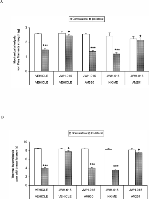 Reversion of the antinociceptive effects of JWH-015.Effects of the subplantar administration of vehicle, AM630 (60 µg), NX-ME (150 µg) or AM251 (150 µg) on the inhibition of the mechanical allodynia (A) and thermal hyperalgesia (B) induced by the subplantar administration of JWH-015 (150 µg) in CFA-injected WT mice. Data are expressed as mean values of the von Frey filaments strength (g) for mechanical allodynia and as the paw withdrawal latency (s) for thermal hyperalgesia ± SEM (5-6 animals per group). For each test and drug, *** indicates significant differences when compared to their corresponding contralateral paw (p<0.001, paired Student's t test) and + indicates significant differences as compared with the ipsilateral paw of the vehicle treated group (p<0.05, one way ANOVA followed by the Student-Newman-Keuls test).