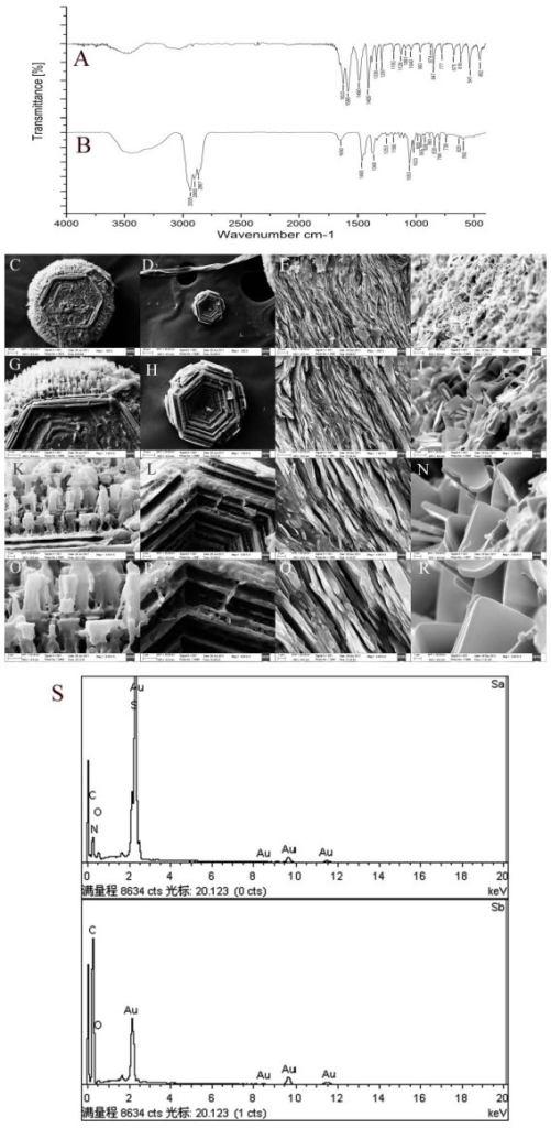 Results of analysis with spectrogram and electron microscope. (A,B) FTIR spectrogram of (A) small stones, showing that the main component was cystine, and (B) of the large stones, showing that the main component was cholesterol. (C-R) Scanning electron microscopy of the small cystine and large cholesterol stones. The small cystine stones displayed (C,D) hexagon crystals of unequal size, some with prominences on the edge (original magnification ×400) and (G,H,K,L) hexagon crystals stacked and arranged tightly. Original magnification (G,H) ×1,000; (K,L) ×3,000. (O,P) A view of one corner of a hexagon crystal shows that the end of the prominence is lamellar (original magnification ×6,000). The large cholesterol stones showed (E,F) amellar cholesterol crystals (original magnification ×400) and (I,J,M,N) stacked lamellar cholesterol crystals, Original magnification (I,J) ×1,000; (M,N) ×3,000. (Q,R) The cholesterol crystals had a smooth, glossy surface, dull borders, and a pyknomorphous texture (original magnification×6,000). (S) X-ray energy spectrogram Sa, spectrogram of the small stones (the elemental composition was carbon, oxygen, nitrogen, and sulfur) Sb, spectrogram of the large stones (the elemental composition was carbon and oxygen).