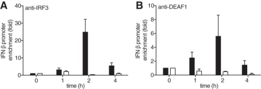 "IFNβ promoters associated with IRF3 are reduced in MEFs from DEAF1−/− mice.A, MEFs from wild type mice (black bars) or DEAF1−/− mice (white bars) were infected with Sendai virus for the times indicated. The cells were lysed, and ChIP assays performed after immunoprecipitating IRF3 from the extracts with a specific anti-IRF3 antibody. The ordinate shows the fold enrichment of the IFNβ promoter in the anti-IRF3 immunoprecipitates compared with that measured after immunoprecipitation from uninfected cells (time = 0). The IFNβ promoter DNA was measured by qRT-PCR, as described in ""Experimental Procedures."" The results are shown ± S.D. for triplicate determinations using MEFs from two different wild type and two different DEAF1−/− mice at each time point. Similar results were obtained in two independent experiments. B, experiment was carried out as in A, except that the ChIP assay was performed after immunoprecipitating DEAF1 from the extracts of MEFs from wild type mice (black bars) or from DEAF1−/− mice (white bars) with an anti-DEAF1 antibody."
