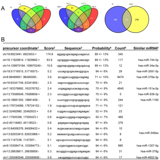 PMC3808701_aging 05 692 g004 identification of novel mirnas in young and old skeleta open i