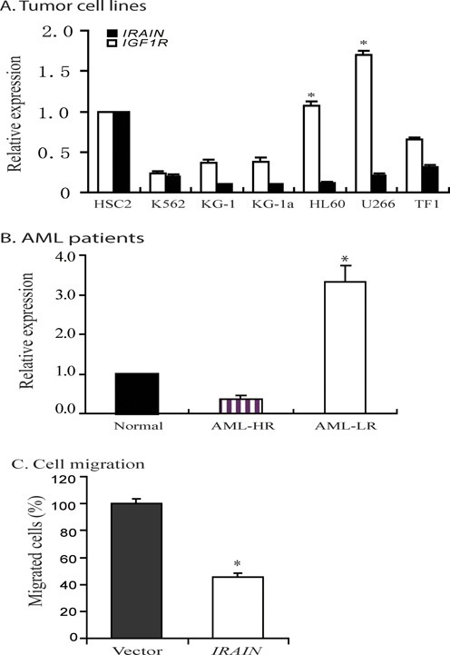 Downregulation of the IRAIN lncRNA in tumor cell lines and AML tissues. (A) Expression patterns of IRAIN and IGF1R in tumor cell lines. β-Actin was used in the internal PCR control for qPCR. Data are represented as mean ± SD. The relative expression was determined by normalizing the qPCR signals over that of normal HSC2 cells. *P < 0.05 as compared with the IGF1R coding RNA. (B) Expression of IRAIN lncRNA in AML patients. HR, LR: AML with high and low risk (AML-HR, n = 16; AML-LR, n = 18; and normal, n = 5). Data are represented as mean ± SD. *P < 0.05 as compared with the AML high-risk patients. (C) Inhibition of cell migration by 5.4 kb IRAIN lncRNA. Lentiviruses containing the full-length lncRNA and the vector control were transduced into MDA 231 cells. Stable cell clones were used to test the cell migration using transwell assay. Data are represented as mean ± SD. *P < 0.01 as compared with the vector control.