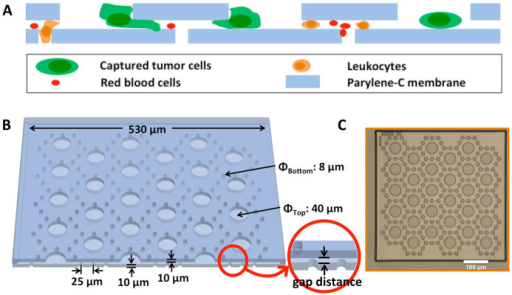 Device design.(A): Cartoon of device cross-sectional view showing tumour cells are captured along the edges of the large top parylene-C pores; (B): 3D view of an elemental unit model with key geometrical parameters labelled, including the gap distance in inset; (C): Microscopic picture of top view of an elemental unit showing large pores on top parylene-C layer and small pores on bottom parylene-C layer with index dots on the top left corner. Scale bar is 100 μm.