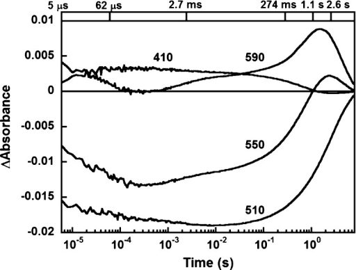 Flash-induced absorptionchanges of GLR at pH 8.5 in 10 mM KClat several characteristic wavelengths, 410, 510, 550, and 590 nm.The concentration of NaCl is <1 μM. The traces were globallyfit with six kinetic components with time constants shown at the top.