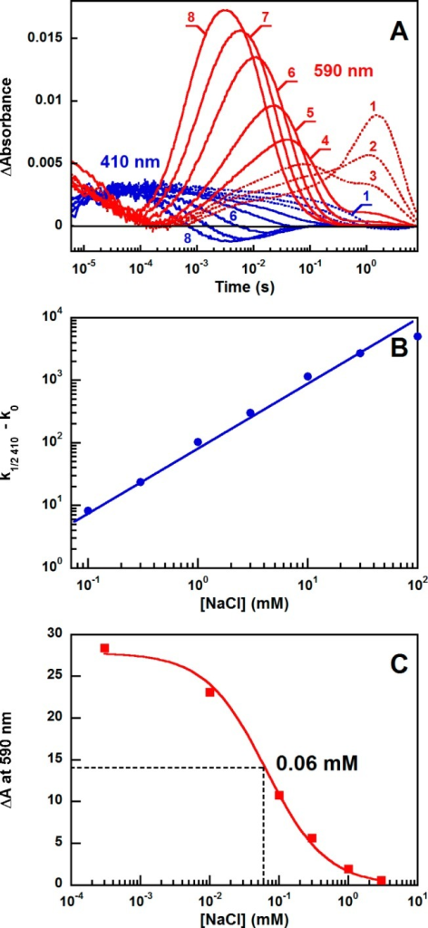 "Effect of sodiumchloride on the kinetics of the GLR photocycleat two selected wavelengths, 590 nm, representing formation and decayof the red-shifted intermediate(s) K and O, and 410 nm, tracking theblue-shifted intermediate(s) M. (A) Traces 1–8 are the absorptionchanges at 0.3 μM, 100 μM, 300 μM, 1 mM, 3 mM, 10mM, 30 mM, and 100 mM NaCl. (B) Rate constant of the decay of theblue-shifted intermediate vs NaCl concentration (in a single-componentfit; k0 is reciprocal of the half-decaytime at 410 nm at 0.3 μM NaCl). (C) Decrease in the amplitudeof absorption changes at 590 nm from the long-lived O-like intermediate(time constant of 2.6 s) upon addition of NaCl, which indicates aswitch from a ""Na+-independent"" to a ""Na+-dependent"" photocycle. The data were fit with theequation ΔA590([Na+])= ΔA0/(1 + K[Na+]) (see the text), from which it was determined that the Na+ concentration at which 50% of the molecules proceed throughthe sodium ion-dependent cycle is K–1 = 60 ± 7 μM."