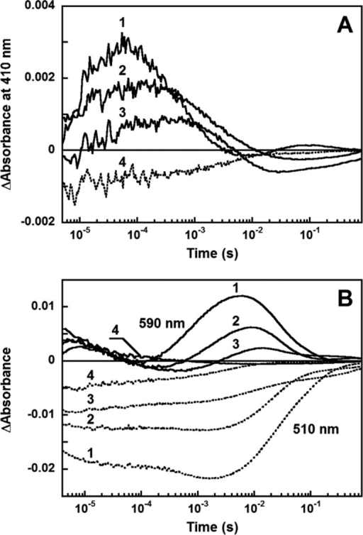 pH dependence of transient absorptionchanges of GLR in the presenceof 100 mM NaCl at selected wavelengths: (A) 410 nm and (B) 590 and510 nm. Numerals 1–4 correspond to pH 8.3, 6.1, 5.1, and 3.5,respectively.