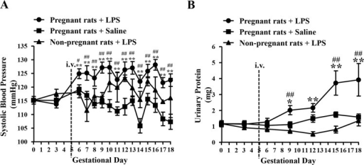 Mean SBP (A) and urinary protein level (B) of each group on different GDs.Pregnant rats + LPS, N = 15; Pregnant rats + Saline, N = 15; Non-pregnant rats + LPS, N = 5. Data are expressed as mean ± SEM, *P < 0.05, **P < 0.01 vs. GD 0; #P < 0.05, ##P < 0.01 vs. saline-treated pregnant group on the corresponding GD.