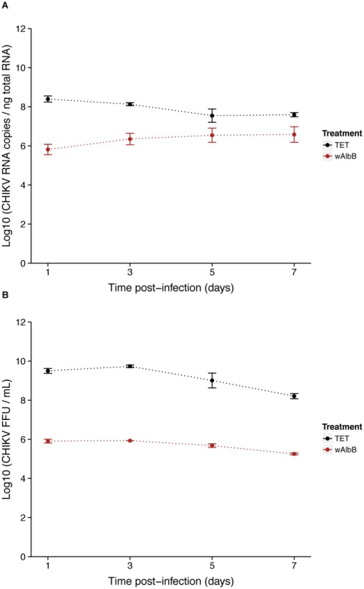 Effect of Wolbachia on CHIKV replication and infectiosity.Kinetics at MOI 0.1 of CHIKV RNA titer measured by RT-qPCR on total cellular RNA (A) and CHIKV infectious titer in supernatant measured by FFA (B) in presence of Wolbachia (wAlbB) or in cells cured from the bacteria by tetracycline treatment (TET). Error bars represent the standard deviation of the mean of three independent samples.