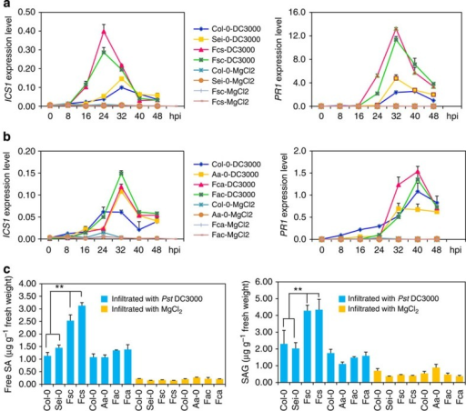 Free SA and SA glycoside levels in Arabidopsis thaliana F1 hybrids and their parents.(a) qPCR analyses of ICS1 and PR1 expression in F1 hybrids and parents of Col-0 × Sei-0 every 8 h post infiltration (hpi) up to 48 hpi with Pseudomonas syringae pv. tomato (Pst) DC3000 at 1 × 105 c.f.u. ml−1 and MgCl2. Fsc and Fcs, reciprocal F1 hybrids, where maternal line is Sei-0 and Col-0, respectively. (b) qPCR analyses of ICS1 and PR1 expression in F1 hybrids and parents of Col-0 × Aa-0 1 every 8 h post infiltration (hpi) up to 48 hpi with Pst DC3000 at 1 × 105 c.f.u. ml−1. Fac and Fca, reciprocal F1 hybrids, where maternal line is Aa-0 and Col-0, respectively. Data are standardised for abundance of Actin transcript. (c) Free SA and SAG levels in F1 hybrids and parents of two crosses 1 dpi with Pst DC3000 at 1 × 105 c.f.u. ml−1. The results are a representative of three biological repetitions. Error bars indicate s.d.. Data are shown as mean±s.d. (n=3, n means technical replication). **P<0.01 between hybrids and parents (Student's t-test).