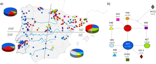 "a) Geographic location of the 252 individuals sequenced for mtDNA in the Iberian Peninsula, which was divided into four regions (NE, NW, SE and SW). Pie charts represent the proportion of the samples with each haplotype in each region. b) Median-joining network of the 252 mtDNA sequences. Each haplotype (H1 to H12) is represented by a different coloured symbol (the same in the map). Grey numbers on the lines connecting haplotypes indicate the position of mutations in the alignment. ""n"" is the number of sequences in each haplotype. Less frequent haplotypes are represented by a square (n = 1), diamond (n = 2) and triangle (n = 3) to facilitate their identification."