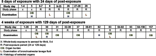 Study design of short-term studies with 5 days and 4 weeks of exposure