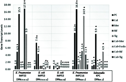 Gene transcript levels in vitro for the genes blaCTX-M-15, blaCTX-M-15 and blaOXA-48, blaNDM-1, blaKPC-2 in their respective isolates IMP33, IMP53, IMP216, and KPC treated with Colistin, Meropenem, Rifampicin, Tigecycline, Colistin+Meropenem, Colistin+Fosfomycin, Colistin+Rifampicin, or Colistin+Tigecycline at the MIC levels. IMP33: colistin: 4.94 (p = 0.025), meropenem: 15.54 (p = 0.376), rifampicin: 0 (p = 0.002), tigecyclin: 0.07 (p = 0.038), colistin and meropenem: 16.95 (p = 0.012), colistin and fosfomycin: 9.87 (p = 0.487), colistin and rifampicin: 0 (p = 0.001), colistin and tigecycline: 0 (p = 0.025). IMP53 (CTX-M-15): colistin: 7.44 (p = 0.042), meropenem: 4.31 (p = 0.026), rifampicin: N/A, tigecyclin: N/A, colistin and meropenem: 0.28 (p = 0.068), colistin and fosfomycin: 0.69 (p = 0.049), colistin and rifampicin: 0.01 (p = 0.037), colistin and tigecycline: N/A. IMP53 (OXA-48): colistin: 0 (p = 0.875), meropenem: 0.36 (p = 0.746), rifampicin: N/A, tigecyclin: 0.04 (p = 0.001), colistin and meropenem: 5.14 (p = 0.041), colistin and fosfomycin: 14.91 (p = 0.002), colistin and rifampicin: 0 (p = 0.045), colistin and tigecycline: 0 (p = 0.001). IMP216: colistin: 10.20 (p = 0.012), meropenem: 16.79 (p = 0.046), rifampicin: 1.47 (p = 0.049), tigecyclin 2.60 (p = 0.002), colistin and meropenem: 5.14 (p = 0.050), colistin and fosfomycin: 14.91 (p = 0.002), colistin and rifampicin: 4.14 (p = 0.002), colistin and tigecycline: 1.38 (p = 0.372). KPC: colistin: 1.23 (p = 0.005), meropenem: 9.89 (p = 0.019), rifampicin 0.23 (p = 0.001), tigecyclin 0.56 (p = 0.043), colistin and meropenem: 0 (p = 0.011), colistin and fosfomycin: 4.93 (p = 0.032), colistin and rifampicin: 0 (p = 0.012), colistin and tigecycline: 0 (p = 0.048). PC, positive control; Col, colistin; Mer, meropenem; Fos, fosfomycin; Rif, rifampicin; and Tig, tigecycline.