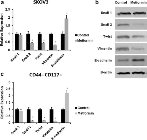 Low concentrations of metformin reduced EMT of ovarian cancer cells and the CD44+CD117+ CSC population. SKOV3 cells were incubated with 0.1 mM metformin for 72 hours. The CD44+CD117+ cells were isolated by flow cytometry. Total RNA was isolated and mRNA was quantitated by real-time RT-PCR. mRNA expression of snail1, snail2, twist, vimentin, and E-cadherin was analyzed. Data show that treatment with 0.1 mM metformin reduced snail2, twist, and vimentin, but not snail1expression level, and upregulated the E-cadherin expression level (a). Bands detected with antibodies indicate the immune reactivity for snail1, snail2, twist, vimentin, E-cadherin, and β-actin: 72 hours of treatment with 0.1 nM metformin significantly downregulated snail2, twist, and vimentin, but not snail1, and upregulated E-cadherin as shown by western blotting (b). Total RNA was isolated from CD44+CD117+ cells and the mRNA was quantitated by real-time RT-PCR. Metformin at 0.1 mM significantly reduced snail2, twist, and vimentin, but not snail1 expression level, and upregulated the E-cadherin expression level (c). * Significant difference compared with control (P < 0.05)