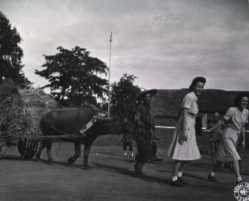 <p>Two women dressed in uniform smile and pull the guide lines on a bullock cart laden with hay.  In between the women and the bull, an Asian man grabs the guide line near the mouth of the bull.  Other Asians stand along the road and watch.</p>
