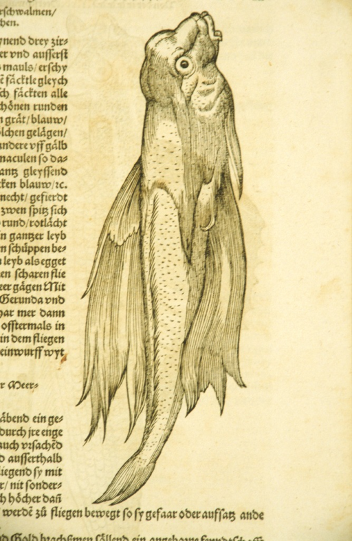 <p>Woodcut illustration of a variety of fish with wings.</p>