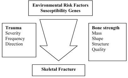 Schema of the object of environmental and genetic risk factors on the interaction between bone strength and trauma that leads to osteoporotic fracture. Source of Fig. - Reference 29