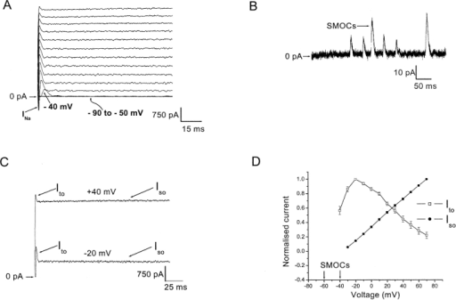 A subtype of retinal third order neurons shows a voltage-graded spectrum of outward currents. (A) Cell was held at −80 mV and currents were elicited in normal Ringer's by 500 ms depolarizing voltage steps from −90 to 70 mV in 10 mV increments. The sodium current is shown by arrow marked as INa. Note the appearance of the Ito at −40 mV (arrow). The magnification of the figure does not allow outward currents to be discerned between −90 to −50 mV (overlapping traces at these voltages shown by curved arrow). (B) At higher gain, SMOCs seen in normal Ringer's at −50 mV. (C) Whole cell outward currents elicited at −20 and 40 mV, comparing the amplitude of the sustained Iso and the apparent amplitude of the transient Ito. (D) Normalized I-V plot of the whole cell outward currents. Region enclosed within arrows indicates the voltage range of SMOC appearance. The magnitude of Iso (closed circles; measured at the end of the 500-ms pulse) and the apparent magnitude of Ito (open squares) have been normalized to their peak values. Data is an average of eight cells.