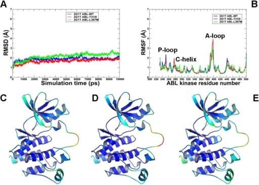 MD simulations of the ABL kinase domain in the Src-like inactive form.Upper Panel: (A) The RMSD fluctuations of Cα atoms and (B) the RMSF values of Cα atoms from MD simulations of ABL-WT (in blue), ABL-T315I (in red), and ABL-L387M (in green). MD simulations were performed using the Src-like inactive form of the ABL kinase domain. Legends inside the figure panels refer to the pdb entries used in MD simulations. Lower Panel: Color-coded mapping of the averaged protein flexibility profiles (RMSF values) from MD simulations of the ABL-WT and ABL mutants. This mapping is presented for ABL-WT (C), ABL-T315I (D) and ABL-L387M (E). The color-coded sliding scheme is the same as was adopted for Figure 3.