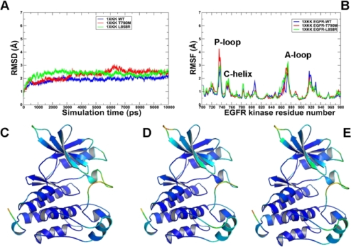 MD simulations of the EGFR kinase domain in the Src/Cdk-like inactive form.Upper Panel: (A) The RMSD fluctuations of Cα atoms and (B) the RMSF values of Cα atoms from MD simulations of EGFR-WT (in blue), EGFR-T790M (in red), and EGFR-L858R (in green). MD simulations were performed using the Src/Cdk-like inactive form of the EGFR kinase domain. Legends inside the figure panels refer to the pdb entries used in MD simulations. Lower panel: Color-coded mapping of the averaged protein flexibility profiles (RMSF values) from MD simulations of the EGFR-WT and EGFR mutants. This mapping is presented for EGFR-WT (C), EGFR-T790M (D) and EGFR-L858R (E). The color-coded sliding scheme is the same as was adopted for Figure 3.