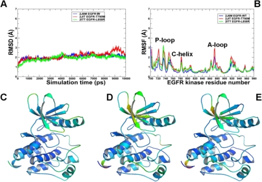 MD simulations of the EGFR kinase domain in the active form.Upper Panel: (A) The RMSD fluctuations of Cα atoms and (B) the RMSF values of Cα atoms from MD simulations of EGFR-WT (in blue), EGFR-T790M (in red), and EGFR-L858R (in green). MD simulations were performed using the active form of the EGFR kinase domain. Legends inside the figure panels refer to the pdb entries used in MD simulations. Lower Panel: Color-coded mapping of the averaged protein flexibility profiles (RMSF values) from MD simulations of the EGFR-WT and EGFR mutants. This mapping is presented for EGFR-WT (C), EGFR-T790M (D) and EGFR-L858R (E). The color-coded sliding scheme is the same as was adopted for Figure 3.