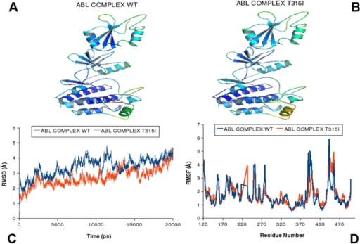 "MD simulations of the ABL-SH2-SH3 regulatory complex in the active form.Upper Panel: Color-coded mapping of the averaged protein flexibility profiles (RMSF values) from MD simulations in the active form (pdb entry 1OPL). The mapping is presented for ABL-WT (A) and ABL-T315I (B). The color-coded sliding scheme is the same as was adopted for Figure 3. Lower Panel: The RMSD fluctuations of Cα Atoms (C) and the RMSF values of Cα Atoms (D) from MD simulations. MD simulations of ABL-WT (in blue), and ABL-T315I (in red) were performed using the active ABL form (""top-hat"") (pdb entry 1OPL)."