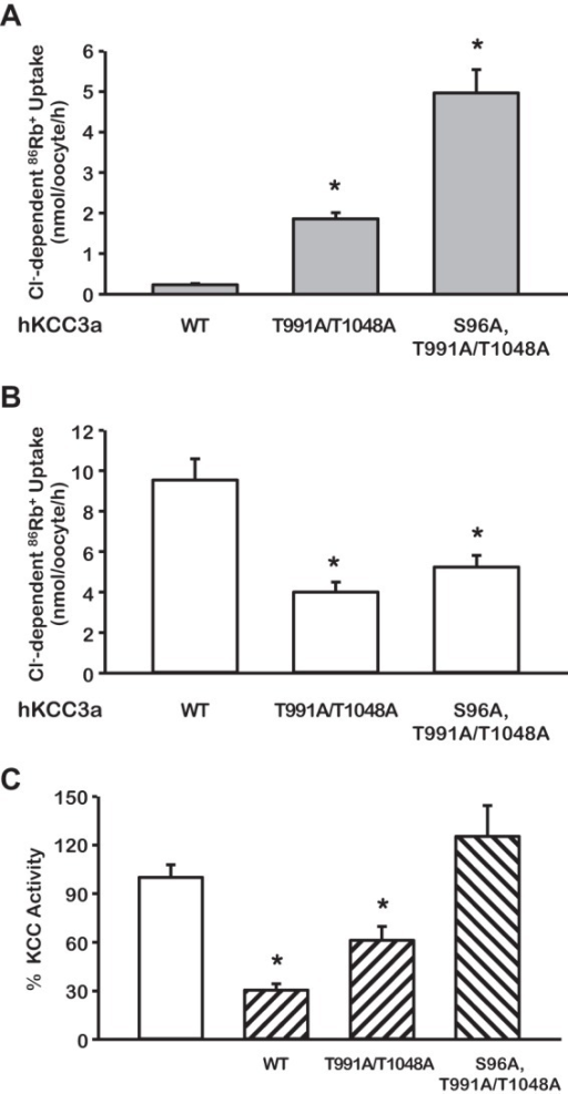 Serine 96 is a third site involved in regulation of KCC3a activity.A and B, functional expression assay was assessed in isotonic (A) or hypotonic (B) conditions in oocytes injected with cRNA for WT KCC3, KCC3 double mutant (T991A/T1048A), or KCC3 triple mutant (S96A/T991A/T1048A) as stated. *, p < 0.001 versus WT. C, the triple mutant KCC3a S96A/T991A/T1048A is no longer sensitive to WNK3 (hatched bars) inhibition. The open bar shows the control uptake for each clone taken as 100%. The hatched bars show the effect of WNK3 upon wild type or mutants KCC3, as stated. n = 3, *, p < 0.001 versus white bar.