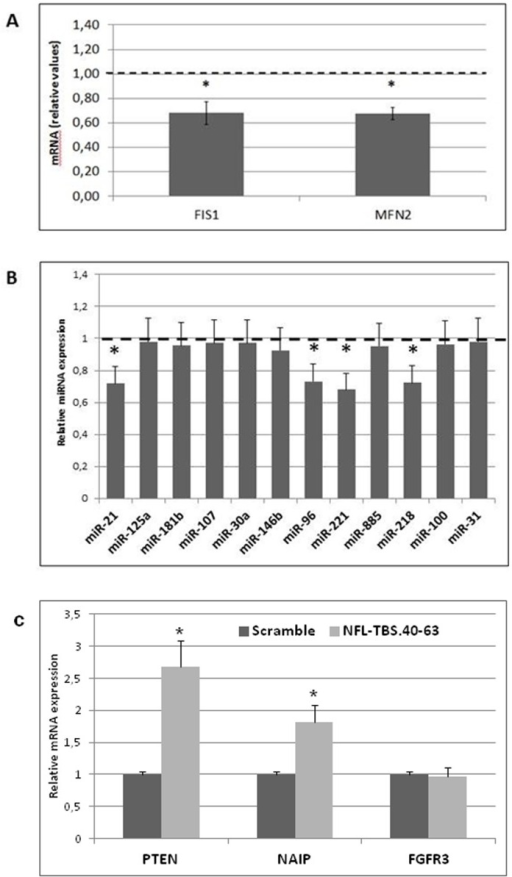 Quantitative PCR analysis of mitochondrial fission/fusion actors and relevant differentially-expressed miRNA-mRNA complexes in human T98G glioblastoma cells.5A: Quantitative PCR analysis of mitochondrial fission/fusion actors (FIS1 and MFN2) in T98G cells. The data are expressed in units (mRNA expression of a specific gene normalized to β-globin mRNA expression) that are relative to the control, which was assigned a unit value. 5B: Quantitative PCR analysis of relevant differentially expressed miRNA in T98G cells. The data are expressed in units (miRNA expression relative to U5 snRNA) that are relative to the control, which was assigned a unit value. 5C: Quantitative PCR analysis of PTEN and NAIP mRNA, directly targeted by miR-21 and miR-221, respectively. FGFR3 expression was used as negative control of miR-100, which expression level was unchanged by peptide treatment. The data are expressed in units (mRNA expression of a specific gene normalized to β-globin mRNA expression) that are relative to the control, which was assigned a unit value. The values are the average ± SD for three separate determinations (N = 3). *: P<0.05 versus control.