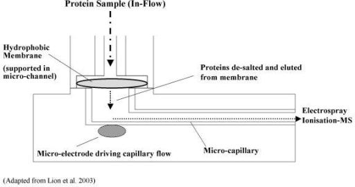 Microfluidic mass spectrometric protein analysis. Proteins are applied directly to a membrane, desalted and directed by microfluidic channel to mass spectrometric analysis.