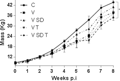 Mean weekly mass of pigs infected with PCV2b for 8 weeks and subjected to different environmental stresses. Pigs were infected with PCV2b and subjected to high stocking density (SD), high temperatures (T) or both (SD T). Pigs were weighed weekly and the average weight for the pigs subjected to each condition was recorded. Significant different values were analysed by one-way ANOVA, with *p < 0.05.