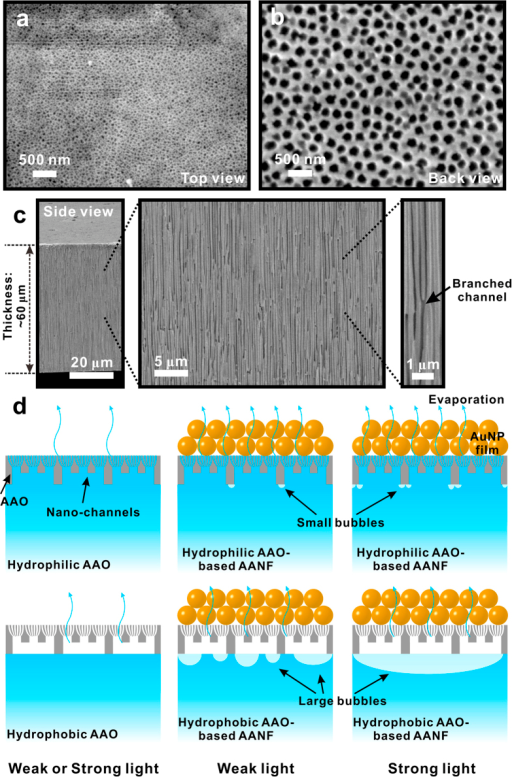 SEM images of the AAO membrane from (a) top view, (b) back view and (c) side view with different magnification.(d) Schematics of evaporation process of HLA, HBA and AANFs under weak (~3.2 kW/m2) or strong (~14.3 kW/m2) light illumination (not drawn to scale). ((d) was drawn by Chengyi Song).