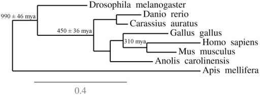 "Phylogenetic context of some ""reference species"" that can be used in behavioral neurosciences. The figure underlines the position and phylogenetic distances of a few species in relation to each other, and suggest how this information can be used to inform the selection of organisms for research. For example, while most research in the behavioral neurosciences is performed using rodents, selecting a species from an outgroup—for example, chicks or lizards—could inform researchers on evolutionary conservation of biobehavioral traits in mammals. These informations complement the usual criteria for species choice (ease of reproduction, rapid generation time, etc.) and the availability of behavioral and physiological assays."