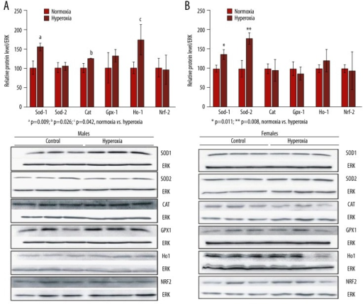 Representative western blots of Sod-1, Sod-2, Cat, Gpx-1, Ho-1 and Nrf-2 protein level in brain of normoxia- and hyperoxia-exposed CBA/H male (A) and female (B) mice (n=3 per group). Results are presented as mean±SEM of three mice per group. Protein intensities are expressed relative to ERK content. For males: a p=0.009; b p=0.026; c p=0.042, normoxia vs. hyperoxia. For females: * p=0.011; ** p=0.008, normoxia vs. hyperoxia.