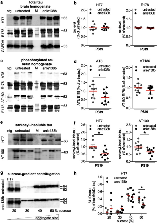 Anle138b reduces insoluble tau levels in PS19 mice a Immunoblots of brain homogenates of non-transgenic (ntg), untreated and anle138b-treated PS19 mice probed with HT7 and E178 antibody detecting total tau. b Densitometric analysis of immunoblots showing the brain protein levels of total tau (HT7 and E178) in untreated and anle138b-treated PS19 mice. (n = 7 mice/group; 10-12 months). c Immunoblots of brain homogenates of ntg, untreated and anle138b-treated PS19 mice probed with the phosphorylation-specific antibodies (AT8 and AT180) and phosphorylation-independent antibody E178. d Densitometric analysis of immunoblots showing phosphorylated tau (AT8, AT180) in untreated and anle138b-treated PS19 mice. (n = 10–11 mice/group; 10–12 months). Immunoblots using the antibodies HT7 and AT100 (e) and densitometric analysis (f) of sarkosyl-insoluble aggregated tau protein in the brain of untreated PS19 transgenic mice in comparison to anle138b-treated animals. (n = 9–10 mice/group; 10–12 months). Immunoblots of sucrose-gradient centrifugation fractions from untreated and anle138b-treated mouse brain homogenates, to separate tau aggregates according to their molecular weight (g) and densitometric analysis (h). Anle138b-treated PS19 mice showed a significant reduction of high molecular weight species in the 50 % sucrose fraction in comparison to untreated animals (n = 7 mice/group; 10–12 months). Asterisks indicate significant differences relative to untreated PS19 mice (*p < 0.05; t test)