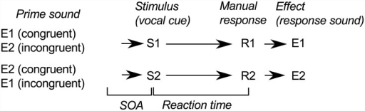 The structure of a trial, common to all experiments.Participants responded to vocal cue S1 or S2 by executing a response gesture R1 or R2. R1 and R2 produced response sounds E1 and E2, respectively, which were also used to prime the gestures. R1 and R2 are mapped to left-hand and right-hand key lifts in Experiment One and Experiment Two and mapped to tapping and scraping gestures in Experiments Three and Four. E1 and E2 are low-pitched and high-pitched tones in Experiment One whereas they are tapping and scraping sounds in Experiments Two and Three. See Table 1 for a design summary.