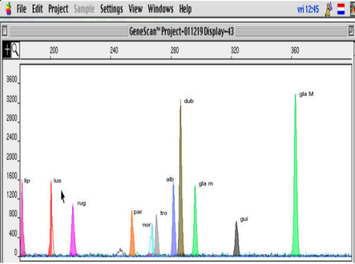 The ITS2-PCR fragment lengths observed for 10 Candida species (GeneScan Analysis screen, ABI Prism 310, Applied Biosystems).