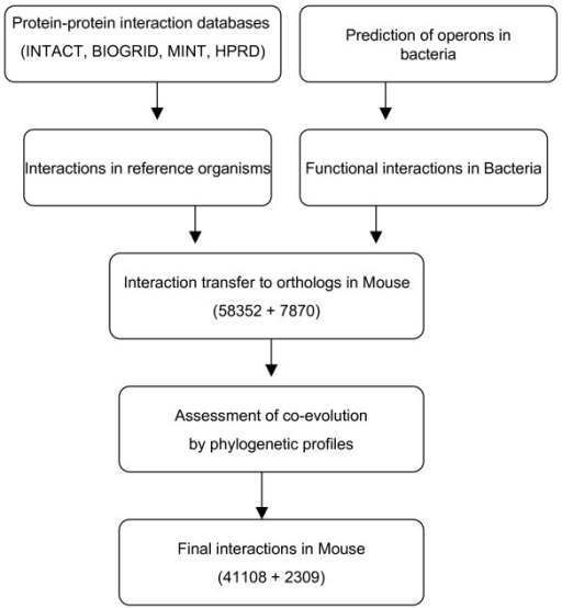 Flowchart of the approach used to predict protein interactions in Mus musculus. Protein interactions were generated using two approaches; 1) Physical interactions in different databases 2) functional interactions in operons. The interactions were transferred to orthologs of Mus musculus and false positives in the interactions were filtered using phylogenetic profiles.