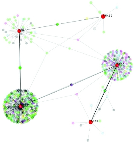 EGFR—RAS protein interaction network from OPHID (Brown and Jurisica, 2005), visualized in NAViGaTor ver. 1.1 (http://ophid.utoronto.ca/navigator) in a 3D mode. Although EGFR, hRAS, kRAS and p53 are not directly linked, these major hubs in the network are highly mutually interconnected. Nodes in the graph are proteins, while edges correspond to interactions. Node color corresponds to GeneOntology biological function, except for highlighted EGFR, p53, p73, hRAS and kRAS. To reduce graph complexity, nodes except for highlighted ones, and related edges are partially translucent using alpha-blending option in NAViGaTor.