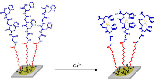Reaction scheme of the transition metal complexation on a porous silicon sensor modified with peptide. In this case, Gly-His-Gly-His chelating Cu(II) cations.