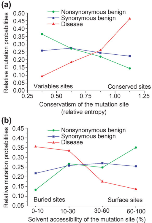 The relative mutation probabilities as a function of mutation site conservation and solvent accessibility. Relative mutation probability as a function of (a) evolutionary conservation of the mutation site (measured using relative entropy), and (b) solvent accessibility of the mutation site in the protein structure. Because the overall probability that a random mutation will cause a genetic disease or be observed as a polymorphism is not known, the probabilities have only relative meaning within each mutation class (disease, synonymous, nonsynonymous). To show different trends clearly, the relative probabilities were normalized to 1 within each class. Conservation of mutation sites in evolution was characterized by the relative entropy using close sequence homologs (see Materials and methods). The solvent accessibility of mutation sites was calculated using the program NACESS [41]. An increase in the degree of evolutionary conservation increases the probability of deleterious mutations and decreases the probability of nonsynonymous benign SNPs (a). An increase in the degree of solvent accessibility decreases the probability of deleterious mutations and increases the probability of nonsynonymous benign SNPs (b). Synonymous mutations do not change amino-acid sequences and are predominantly neutral. Consequently, the probability that a synonymous mutation will be deleterious is relatively constant across sites.